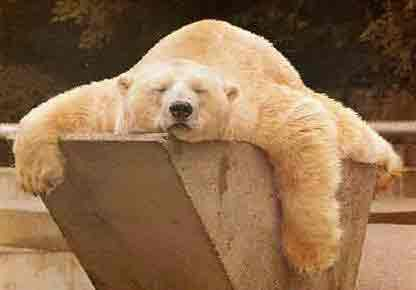 urso dorminhoco.jpg